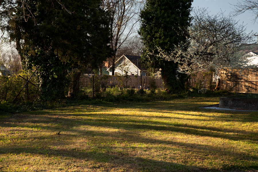 This Brian Charles Steel photograph is a residential yard at sunset.  The low hanging sun causes the trees to cast long shadows across the grass.  The shadows stretch all the way across the yard creating series of light and dark stripes through the grass.  On the far right there is a white dogwood catching yellow sun on its blossoms.