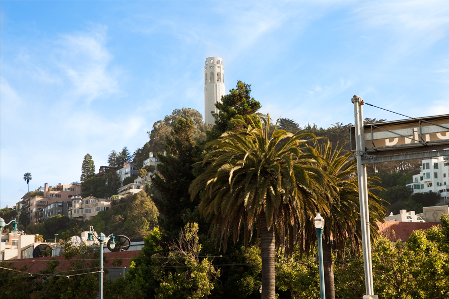 This Brian Charles Steel photo depicts the Coit Tower in the Telegraph Hill neighborhood in San Francisco, California.  The tower is top center of the frame.  Above and behind the tower is a bright blue sky with scattered thin clouds.  The tower is up on a hill the side of the hill is peppered with houses.  Below the tower is a palm tree a couple of pine trees.  On the far right side of the frame is the backside of a parking sign.
